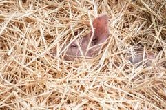 λίγος ύπνος χοίρων στην ξηρά χλόη Στοκ φωτογραφία με δικαίωμα ελεύθερης χρήσης