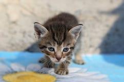 Λίγο άστεγο γατάκι Στοκ Εικόνες