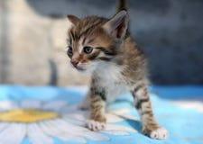Λίγο άστεγο γατάκι Στοκ φωτογραφία με δικαίωμα ελεύθερης χρήσης