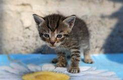 Λίγο άστεγο γατάκι Στοκ Φωτογραφία