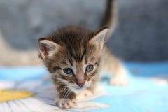 Λίγο άστεγο γατάκι Στοκ φωτογραφίες με δικαίωμα ελεύθερης χρήσης
