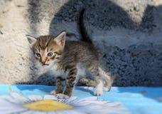 Λίγο άστεγο γατάκι Στοκ Εικόνα
