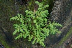 Λίγο δέντρο μεταξύ του τούβλου Στοκ Εικόνες