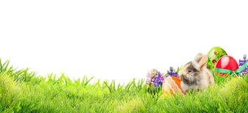 Λίγο λαγουδάκι Πάσχας με τα αυγά και τα λουλούδια στη χλόη κήπων στο άσπρο υπόβαθρο, έμβλημα
