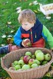 Λίγο αγόρι μικρών παιδιών με το σύνολο καλαθιών των μήλων Στοκ Εικόνες