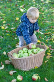 Λίγο αγόρι μικρών παιδιών με το σύνολο καλαθιών των μήλων Στοκ Φωτογραφία