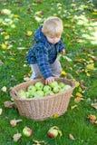 Λίγο αγόρι μικρών παιδιών με το σύνολο καλαθιών των μήλων Στοκ Φωτογραφίες