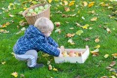 Λίγο αγόρι μικρών παιδιών με το σύνολο καλαθιών των μήλων Στοκ φωτογραφία με δικαίωμα ελεύθερης χρήσης