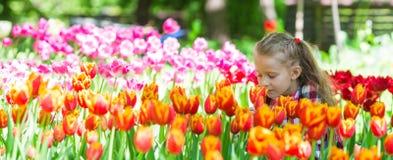 Λίγο λατρευτό κορίτσι που μυρίζει τις ζωηρόχρωμες τουλίπες στοκ εικόνα