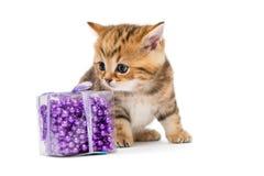 Λίγο γατάκι Βρετανοί και παιχνίδια Χριστουγέννων Στοκ Εικόνες