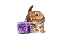 Λίγο γατάκι Βρετανοί και παιχνίδια Χριστουγέννων Στοκ φωτογραφία με δικαίωμα ελεύθερης χρήσης