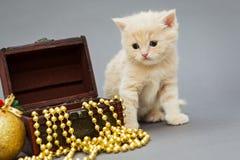 Λίγο γατάκι Βρετανοί Στοκ εικόνα με δικαίωμα ελεύθερης χρήσης