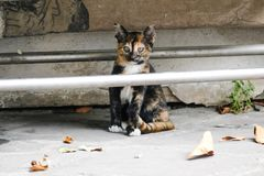 Λίγο γατάκι ζει σε έναν ναό στην Ταϊλάνδη Στοκ εικόνες με δικαίωμα ελεύθερης χρήσης