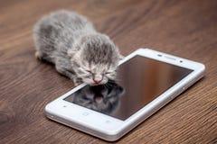 Λίγο γατάκι κάθεται στο τηλέφωνο κυττάρων Το γατάκι επιδεικνύεται στο τηλέφωνο s Στοκ φωτογραφία με δικαίωμα ελεύθερης χρήσης