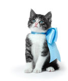 Λίγο γατάκι με ένα τόξο Στοκ Φωτογραφία