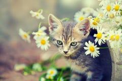 Λίγο γατάκι με τα λουλούδια Στοκ εικόνες με δικαίωμα ελεύθερης χρήσης