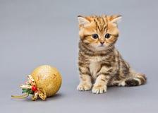 Λίγο γατάκι με τα παιχνίδια Χριστουγέννων Στοκ φωτογραφία με δικαίωμα ελεύθερης χρήσης