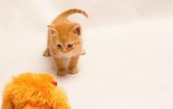 Λίγο γατάκι πιπεροριζών Στοκ φωτογραφία με δικαίωμα ελεύθερης χρήσης