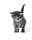 Λίγο γατάκι που απομονώνεται χαριτωμένο Στοκ Εικόνες
