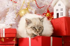 Λίγο γατάκι που βρίσκεται κάτω από το χριστουγεννιάτικο δέντρο στοκ φωτογραφία με δικαίωμα ελεύθερης χρήσης