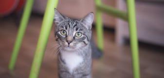 Λίγο γατάκι που εξετάζει τη κάμερα στοκ εικόνες