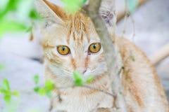 Λίγο γατάκι που κρύβει πίσω από τους θάμνους Στοκ φωτογραφίες με δικαίωμα ελεύθερης χρήσης