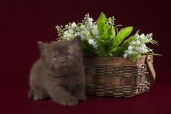 Λίγο γατάκι στα πλαίσια των λουλουδιών άνοιξη Στοκ Εικόνες