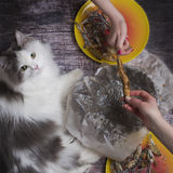 Λίγο γατάκι στα πλαίσια των λουλουδιών άνοιξη Στοκ Εικόνα