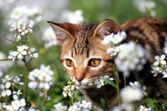 Λίγο γατάκι στον κήπο στοκ φωτογραφία