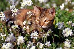Λίγο γατάκι στον κήπο στοκ εικόνες