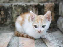 Λίγο γατάκι στο προαύλιο Στοκ φωτογραφίες με δικαίωμα ελεύθερης χρήσης