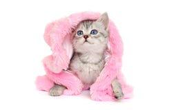 Λίγο γατάκι στο ρόδινο παλτό γουνών σε ένα λευκό Στοκ Φωτογραφίες