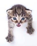 Λίγο γατάκι Στοκ Εικόνες