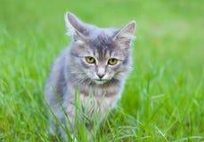 Λίγο γατάκι Στοκ εικόνες με δικαίωμα ελεύθερης χρήσης