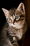 Λίγο γατάκι 2 Στοκ φωτογραφίες με δικαίωμα ελεύθερης χρήσης