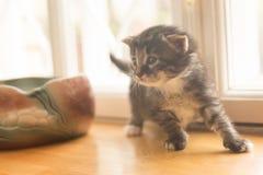 Λίγο γκρίζο γατάκι στο παράθυρο στοκ εικόνα