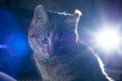 Λίγο γκρίζο γατάκι Στοκ φωτογραφίες με δικαίωμα ελεύθερης χρήσης