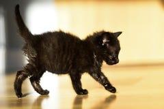 Λίγο γλυκό μαύρο γατάκι Λίγο γλυκό μαύρο γατάκι Στοκ φωτογραφίες με δικαίωμα ελεύθερης χρήσης