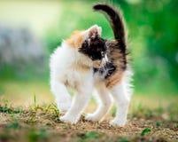 Λίγο γούνινο γατάκι στοκ φωτογραφία με δικαίωμα ελεύθερης χρήσης