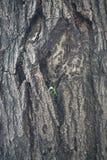 Λίγο δέντρο αυξάνεται στο μεγάλο δέντρο Στοκ φωτογραφία με δικαίωμα ελεύθερης χρήσης