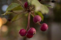 Λίγο δέντρο μηλιάς Στοκ Φωτογραφία
