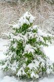 Λίγο δέντρο που καλύπτεται με το άσπρο και χνουδωτό χιόνι Έννοια για το νέα έτος και τα Χριστούγεννα στοκ εικόνες