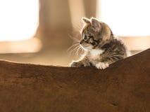 Λίγο ζώο γατών γατακιών γατακιών στην πλάτη αλόγου αλόγων Στοκ εικόνα με δικαίωμα ελεύθερης χρήσης