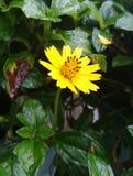 Λίγο κίτρινο αστέρι Στοκ Φωτογραφίες
