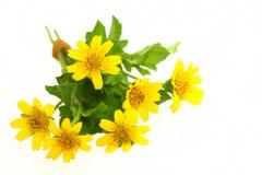Λίγο κίτρινο αστέρι Στοκ εικόνες με δικαίωμα ελεύθερης χρήσης