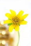 Λίγο κίτρινο αστέρι Στοκ Εικόνες