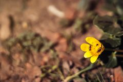 λίγο κίτρινο λουλούδι στοκ εικόνα με δικαίωμα ελεύθερης χρήσης