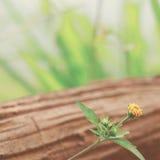 Λίγο κίτρινο λουλούδι στο ξύλο στοκ φωτογραφίες