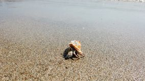 Λίγο καβούρι ερημιτών με το όμορφο κοχύλι που σέρνεται στην παραλία άμμου στη θάλασσα απόθεμα βίντεο