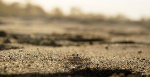 Λίγο καβούρι στην παραλία Palomino στην Κολομβία Στοκ Εικόνες